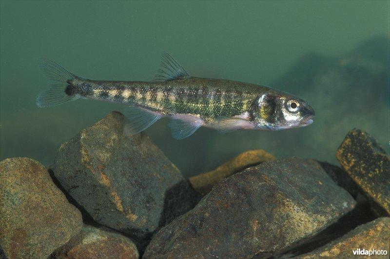Vissen In Vijver : Vijver dieren