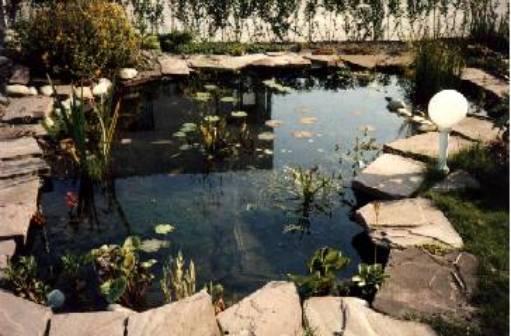 Vijver inleiding for Tuinvijver maken